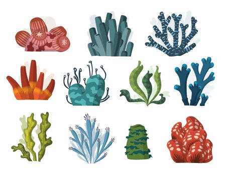 Conjunto de dibujos animados de plantas y criaturas submarinas. Vector aislado corales y algas.