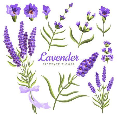 Lavender. Set of watercolor lavender flowers and symbols on the white background, aquarelle. Vector illustration. Hand-drawn floral decorative elements useful for invitations, scrapbooking, design. Çizim