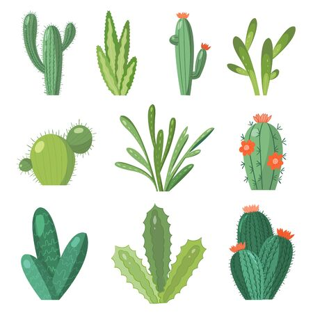 Cartoon cactus set. Vector set of bright cacti and aloe. Colored, bright cacti flowers isolated on white background Stock fotó - 134325892