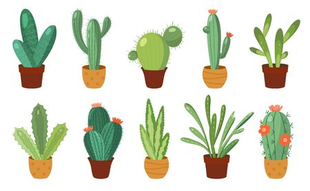 Cartoon cactus set. Vector set of bright cacti and aloe. Colored, bright cacti flowers isolated on white background Stock fotó - 134327957