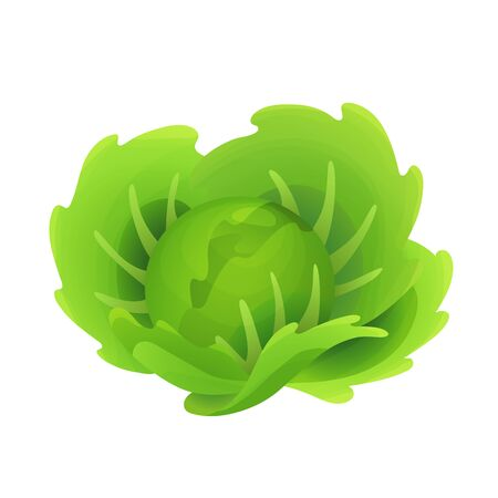 Cabbage fresh vegetable vector concept. Healthy diet flat style illustration. Isolated green food, can be used in restaurant menu, cooking books and organic farm label Vettoriali