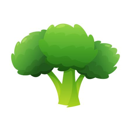 Broccoli fresh vegetable vector concept. Healthy diet flat style illustration. Isolated green food, can be used in restaurant menu, cooking books and organic farm label