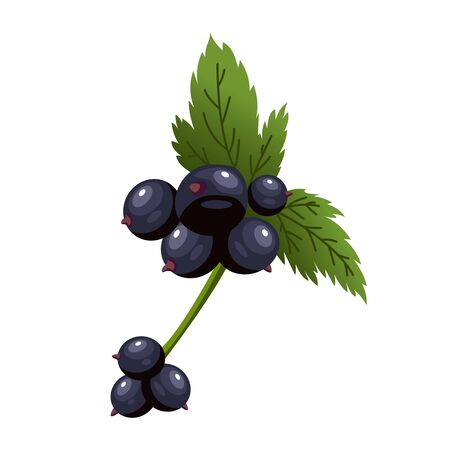 Hand drawn branch black currant berries with leaves. Fresh summer berries. Fruit botany cartoon vector illustration. Fresh organic food