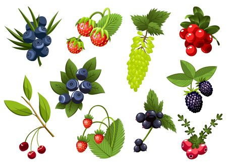 Set of hand drawn branchs currant, grapes, blueberry, strawberry, cherry, bramble, cranberry, berries with leaves. Fresh summer berries. Fruit botany cartoon vector illustration. Fresh organic food