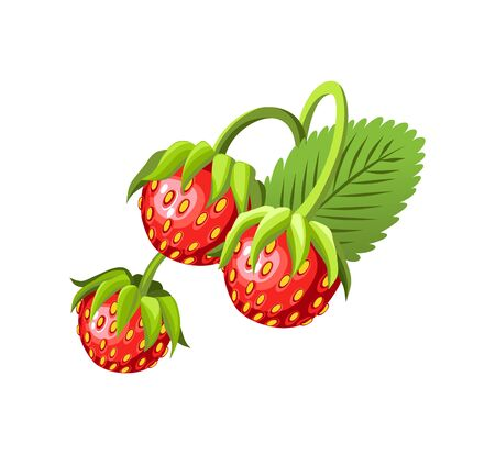 Hand drawn branch strawberry berries with leaves. Fresh summer berries. Fruit botany cartoon vector illustration. Fresh organic food