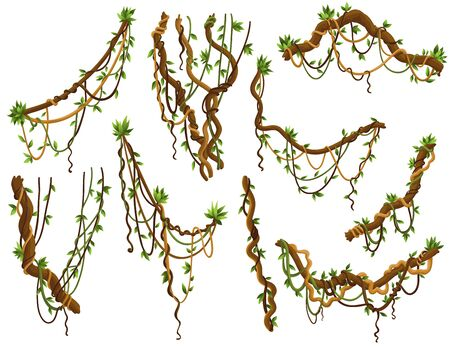 Collection of twisted wild lianas branches. Jungle vine plants. Rainforest flora and exotic botany