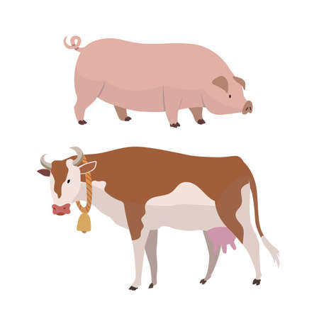 Cow and pig. Eco farming. Vector Illustration of butcher shop