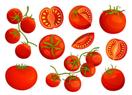 Tomatoes. Collection of chopped tomatoes isolated on white background. Vector fresh red tomatoes. Single tomato, half a tomato, a slice of tomato, cherry tomato