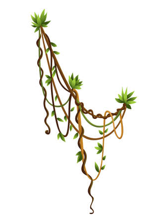 Liana or jungle wild vine winding branches. Woody natural tropical rainforest Stock Illustratie