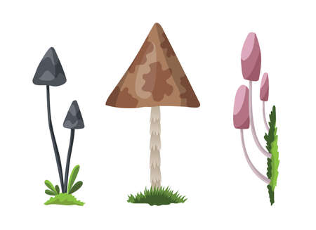 Mushroom and toadstool. Illustration of the different types of mushrooms on a white background. Colorful forest wild collection of assorted edible mushrooms and toadstools