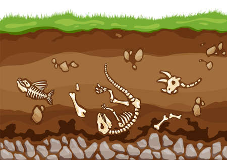 Soil layers with bones. Surface horizons with fossil reptile skeleton, upper layer of earth structure with mixture of organic matter, minerals. Buried lizard bones in dirt and underground clay layer