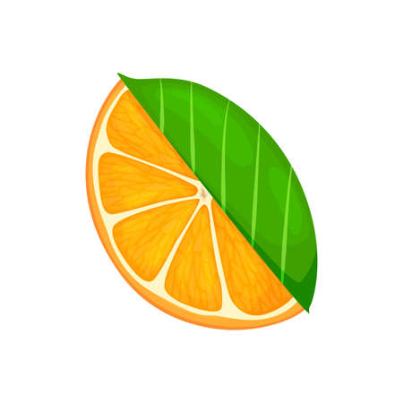 Fresh ripe orange. Piece fruit with leaves. Vector illustration in a flat style