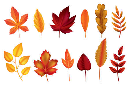 Autumn leaves. Symbols with watercolor texture, vector illustration. Isolated design elements set of maple, oak or birch and rowan tree leaf. Leaves for seasonal greeting card design Imagens