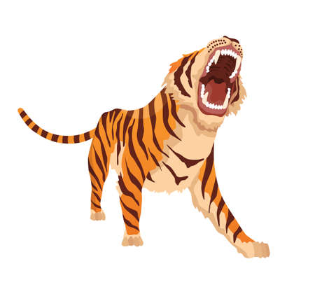 Adult big tiger. Angry animal from wildlife. Big cat. Predatory mammal. Painted cartoon animal design. Flat vector illustration isolated on white background