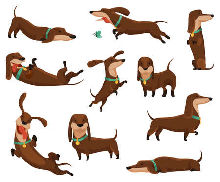 Group of dogs dachshund. Cute funny characters portrait in different poses. Short-legged pets with long body. Adorable cartoon vector illustration