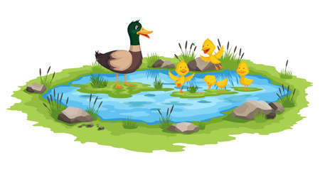 Mother duck and little ducklings swims on the water in pond. Cartoon wild bird with cute yellow babies. Duck family cartoon vector illustration
