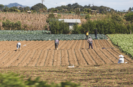 Workers in a farm field in rural Guatemala, Central America.