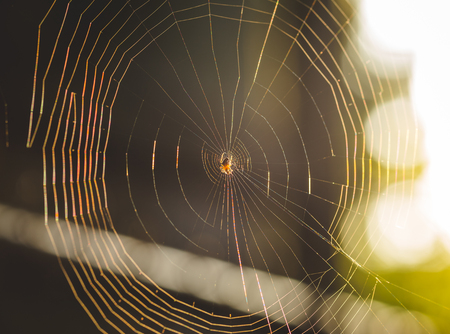 Afternoon sun reflecting on an intricate spider web. Stock Photo
