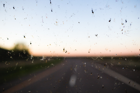 Dead bugs splattered on a windshield with a highway in the background.