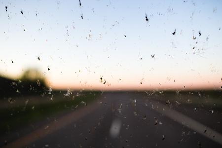 Insetti morti schizzati su un parabrezza con una strada sullo sfondo.