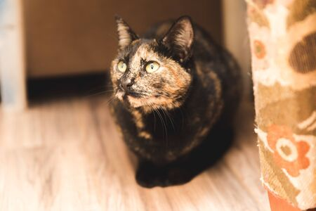 Black, brown, and tan cat with green eyes sitting in a corner.