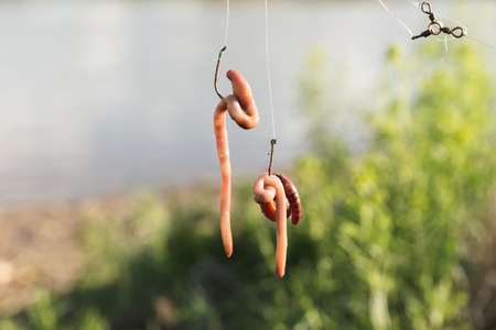 Earthworms hang from fishing hooks near a river. Stock Photo - 78080674