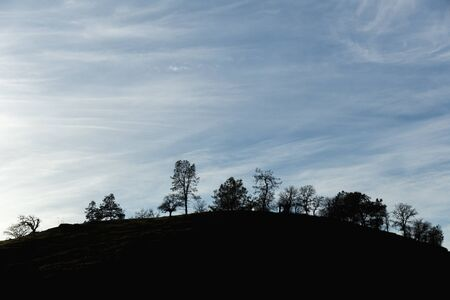 Trees against blue sky with wispy clouds.