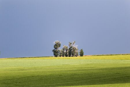 Trees poke up out of the landscape with dark sky and green fields.