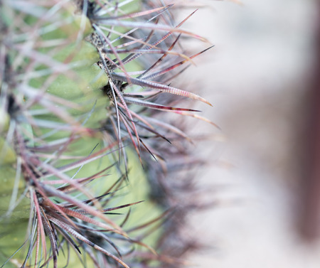 Close up view of cactus spines and details.