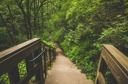 Concrete stairs with metal and wood guard rails in lush, green forest. Columbia River Gorge, Oregon, USA.