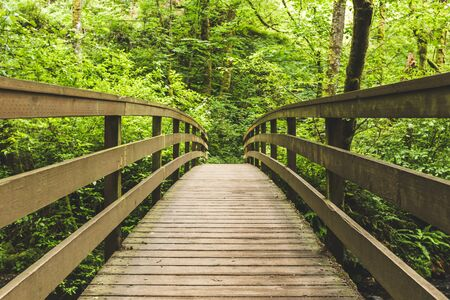 Wooden foot bridge leading into thick, green, lush forest. Walking path in Columbia River Gorge, Oregon, USA.