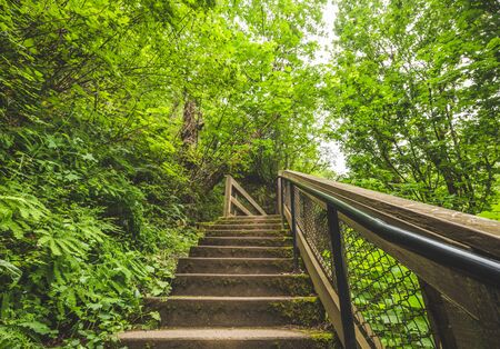 Wooden staircase with metal handrail in a lush, green forest. Columbia River Gorge, Oregon, USA.