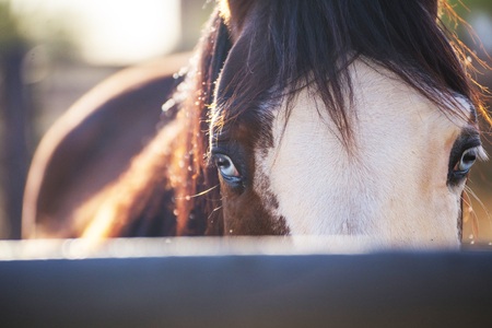 Close up portrait of horse with bright blue eyes looking at camera. Desert horse stable setting.