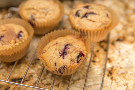 Home made blueberry muffins in paper cups cooling on a baking rack.