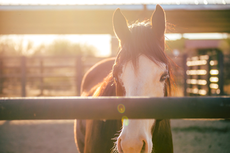Adult horse standing in a stable in warm sunlight. Desert horse corral setting at golden hour.