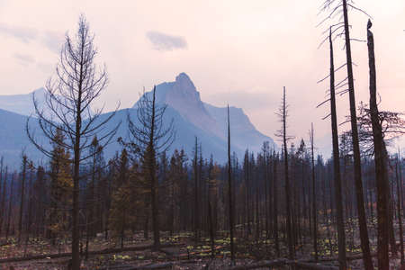 Steep rocky cliffs in a hazy sunset at Glacier National Park. Burned trees in foreground, tall mountains and clouds in background. Forest fire smoke at sunset in Montana.