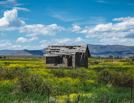 Abandoned old building stands in the middle of vast farm land in spring or early summer. Captured in Montana, USA.