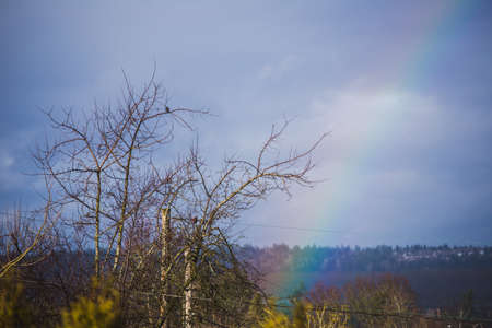 Rainbow near a tree with bird perched in branches. Rolling hills in distance. Captured in fall or winter in Portland, Oregon, USA.