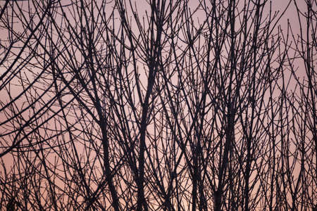 Tree branches with no leaves in front of gray-orange sky on a winter or fall day.