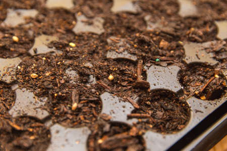 Dark, wet soil and seeds in a plastic gardening starter tray. Tray is used to help start growing new plants, which are usually moved to a larger container afterwards.