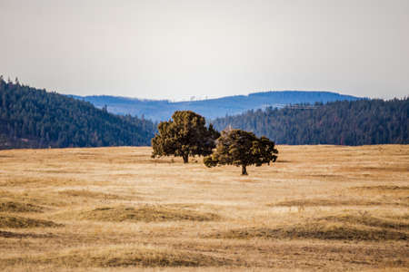Two trees stand in a vast, golden field with rolling hills in background.