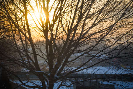 Yellow sunlight shines behind a tree in a suburban winter landscape. Captured in Boise, Idaho, USA.
