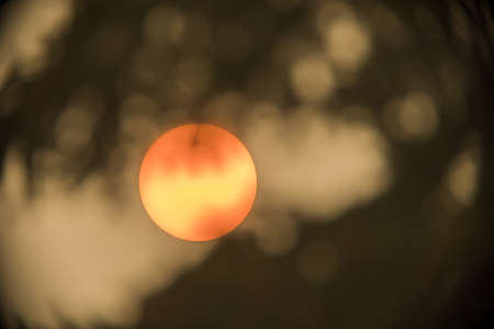 Zoomed-in sun between tree branches. Sun is clearly visible through a filter of dense smoke caused by nearby forest fires.