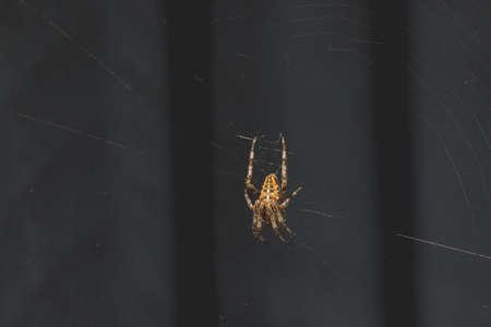 An orb weaver spider waits in its web. Zdjęcie Seryjne