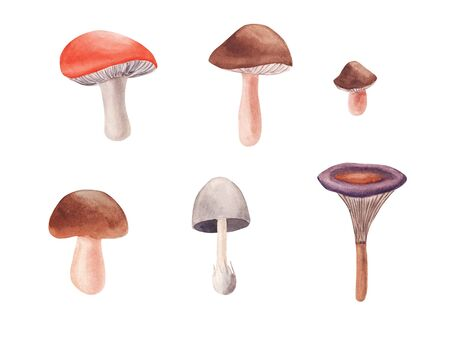 Hand drawn Watercolor mushrooms set isolated on white background. Edible mushroom collection. Hand painted illustration for design autumn background Reklamní fotografie