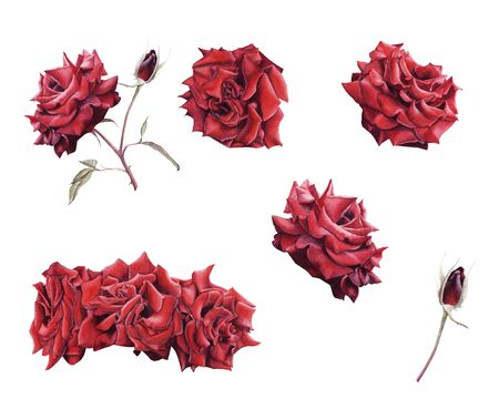 Hand Drawn Watercolor set Red Rose flower isolated on white background. Design element for greeting card, wedding invitation, birthday, Valentines Day, mothers day and other seasonal holidays Stock Photo