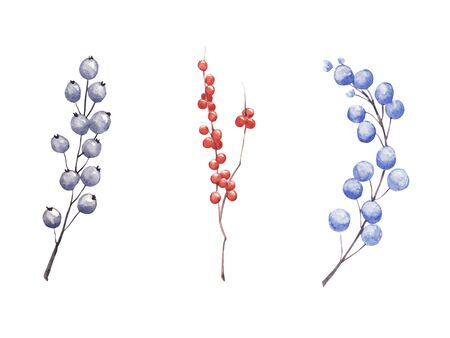 Hand drawn  winter berries and branches set isolated on white background. Illustration for magazine or book, poster and card design.