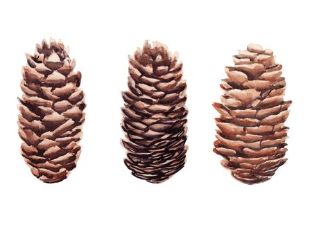 Hand drawn  set of pine cones isolated on white background. Design element for greeting card, magazine, banners Stockfoto