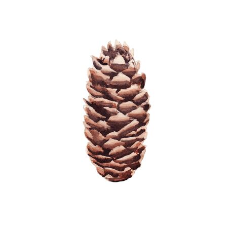 Hand drawn  illustration of pine cone isolated on white background. Design element for greeting card, magazine, banners