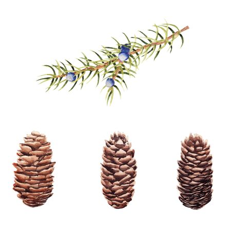 Hand drawn  set of pine cones and juniper branch isolated on white background. Design element for greeting card, magazine, banners Stockfoto